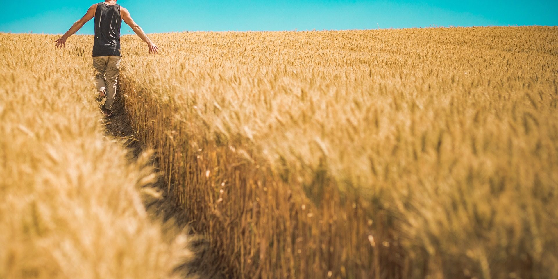 Aumentano i giovani calabresi occupati nel settore agricolo